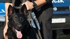 Elbląg. Policja bada przypadki pogryzienia przez psy. Przypominamy o obowiązkach właścicieli. Pies musi być na smyczy! - 04.04.2017