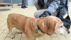 Sztum : Zagubiony pies wrócił do domu dzięki tabliczce z kodem QR - 02.01.2018