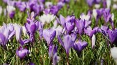 """""""Wiosna, wiosna, wiosna ach to Ty!"""" Dziś pierwszy dzień astronomicznej wiosny!"""