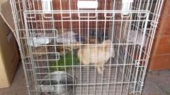 Malbork : Znaleziono królika nad Nogatem. Pomóż odnaleźć właściciela!