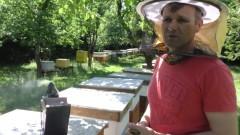 Złodzieje miodu rujnują życie rodziny, mieszkańcy boją się o własne życie. Pasieki mają obserwować drony.