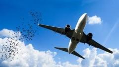 Plany Ryanair na kolejne lato.