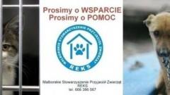 """Każdy może pomóc podopiecznym Malborskiego Stowarzyszenia Przyjaciół Zwierząt """"Reks"""""""