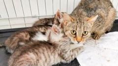 """90 bezdomnych kotków potrzebuje opieki. Malborski """"Reks"""" prosi o pomoc."""