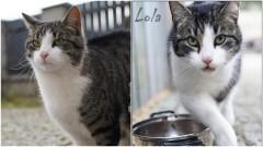 Kto przygarnie kotka? Kto pokocha śliczną Lolcię?