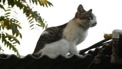 Kot na dachu i zderzenie trzech pojazdów na DK55 – raport sztumskich służb mundurowych.