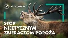 """Trwa akcja Lasów Państwowych """"Stop nieetycznym zbieraczom poroża""""."""