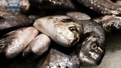 Kłusownik nielegalnie łowiący ryby złapany