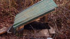 Szukamy zwyrodnialca, który zabił psa i porzucił razem z budą w rowie na polach w miejscowości Lasowice Małe - Lasowice Agro Lawi koło Malborka