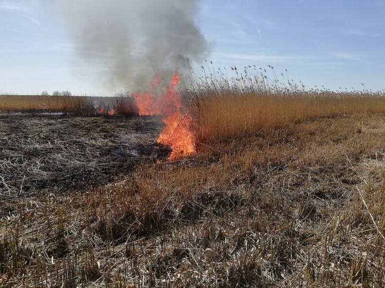 Plaga podpaleń suchych traw i trzcin dotarła do gminy Stegna