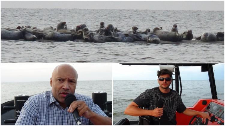Mikoszewo: Czy foki dobiją rybaków i turystykę na Mierzei Wiślanej?