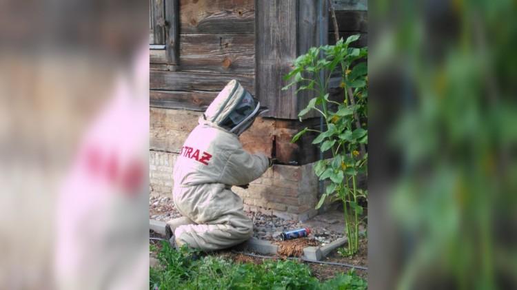 Strażacy likwidują gniazda os. Uwaga na ukąszenia owadów latem!