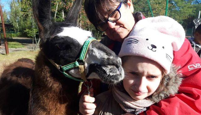 Uśnice: Ostatnie zajęcia z alpakoterapii dla dzieci ze Specjalnego Ośrodka Szkolno-Wychowawczego