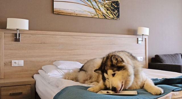 Więcej udogodnień dla pupili w czterogwiazdkowym hotelu Tristan w Kątach Rybackich.