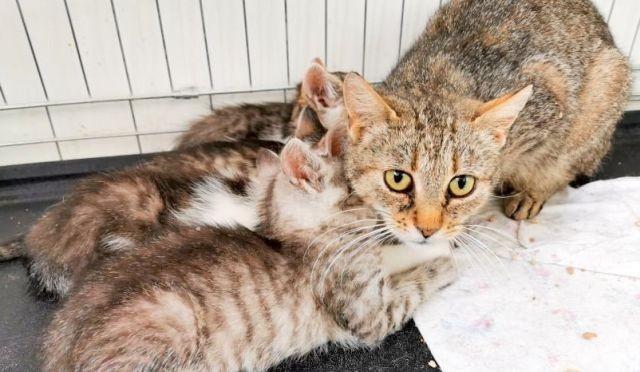 90 bezdomnych kotków potrzebuje opieki. Malborski