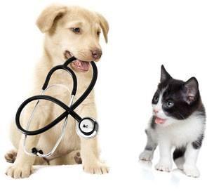 Miłoradz: Dofinansowywanie zabiegów kastracji i sterylizacji psów i kotów