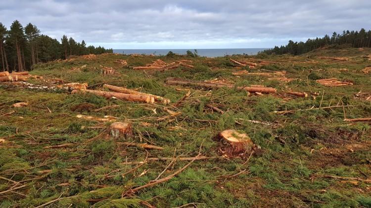 Wycięli 10 tys. drzew na miejscu Przekopu Mierzei Wiślanej. Zobacz wideo…