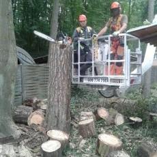 Wycinka i korekta drzew